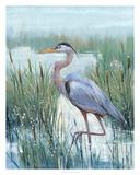 Marsh Heron II Giclee Print by Tim O'toole