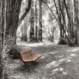 Old Mill Park Reproduction photographique par Alan Blaustein