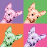 Sweet Chihuahua Pop Fotografisk trykk av Jon Bertelli