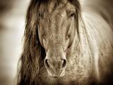 Mustang Sally Fotoprint van Lisa Dearing