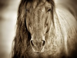 Mustang Sally Photographic Print by Lisa Dearing