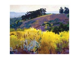 Late Sun, Eucalyptus on the Ridge Affischer av Marcia Burtt