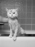 Bert au bain Toile tendue sur châssis par James Flad