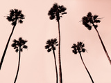 Palm Trees 1997 Copper Reproduction photographique par Erik Asla