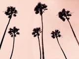 Palm Trees 1997 Copper Fotografie-Druck von Erik Asla