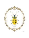 Adorning Coleoptera VII Affiches par James Wiens