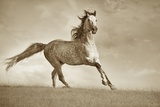 Like the Wind Photographic Print by Lisa Dearing