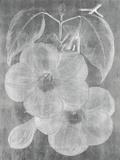 Chalky Floral Impressão giclée por Maria Mendez