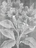Chalky Posy Impressão giclée por Maria Mendez