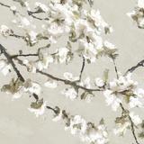 Confetti Bloom I Reproduction procédé giclée par Tania Bello