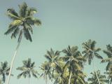 Palm Grove Giclee Print by Chris Simpson