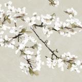 Confetti Bloom III Reproduction procédé giclée par Tania Bello