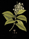 Vintage Botanicals IV - Noir Giclee Print by Nathaniel Wallich