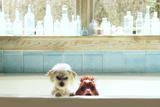 Bath Tub Buddies Posters por Betsy Cameron