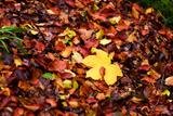 On the Autumn Trail Impressão fotográfica por Philippe Sainte-Laudy