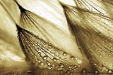 Sweeping in the Rain-Gold Fotografisk tryk af Ursula Abresch