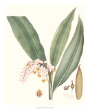 Soft Tropical II Giclee Print by George Smith