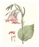 Soft Tropical III Giclee Print by George Smith