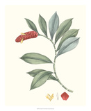Soft Tropical VI Giclee Print by George Smith
