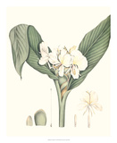Soft Tropical V Giclee Print by George Smith