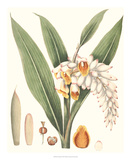 Soft Tropical I Giclee Print by George Smith