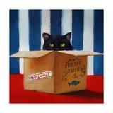 Cat Burglar Kunstdrucke von Lucia Heffernan