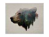 Pacific Northwest Black Bear Pósters por  Davies Babies