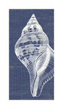 Denim Washed Seashell II Giclee Print by Suzanne Nicoll