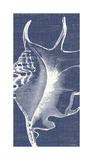 Denim Washed Seashell III Giclee Print by Suzanne Nicoll