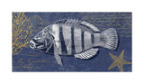 Denim Washed Fish II Giclee Print by Suzanne Nicoll