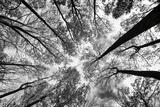 Looking Up I BW Art par  Aledanda