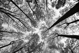Looking Up I BW Posters by  Aledanda