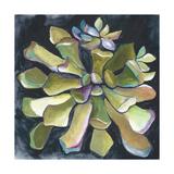 Succulent Rosette I Premium Giclee Print by Chariklia Zarris