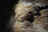 Rare Calcite Deposits Called Folia, Grow on the Walls of a Cave Fotografie-Druck von Michael Nichols