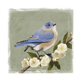 Bluebird Branch I Premium Giclee Print by Victoria Borges