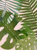 Tropical Tangle II Posters par Victoria Borges