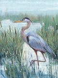 Marsh Heron II Prints by Tim O'toole