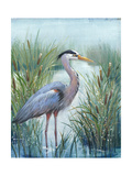 Marsh Heron I Poster by Tim O'toole