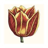 Tulip Garden IV Prints by Vision Studio