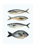 Four Fish I Poster von Emma Scarvey