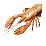 Illustrated Lobster I Art by Rick Novak