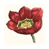 Tulip Garden VIII Art by Vision Studio