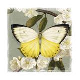 Butterfly Branch I Affiches par Victoria Borges