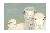 Bashful Sheep II Premium Giclee Print by Jade Reynolds