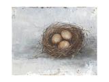 Rustic Bird Nest II Premium Giclee Print by Ethan Harper