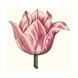 Tulip Garden VII Posters by Vision Studio