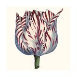 Tulip Garden VI Prints by Vision Studio