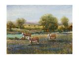 Field of Cattle II Giclée-Premiumdruck von Tim O'toole