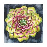 Succulent Rosette III Premium Giclee Print by Chariklia Zarris