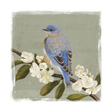 Bluebird Branch II Premium Giclee Print by Victoria Borges